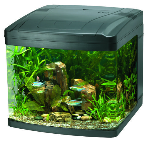 128 best images about cool aquarium ideas on pinterest for Small fish aquarium ideas