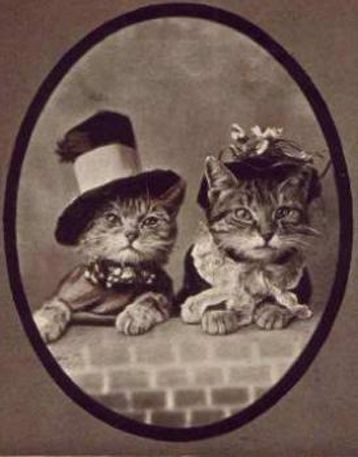 vintage kitten photos   Books, Crafts & Pretty Things Blog: Cat Thursday - Vintage Cats