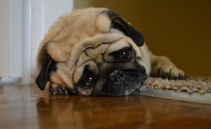 5 formas en las que podrías estar destruyendo el espíritu de tu perro sin saberlo. Todos amamos a nuestros perros y queremos lo mejor para ellos. Eso significa hacer todo lo posible para que estén felices. Pero ¿y si estamos haciendo algo que los hace infelices sin darnos cuenta? Quizás este no sea tu caso, pero si tienes alguna duda, o si quieres ayudar a alguien que creas que está estresando a su perro, revisa la siguiente lista.