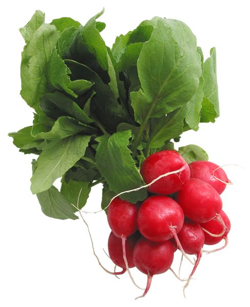Radishes PNG Picture