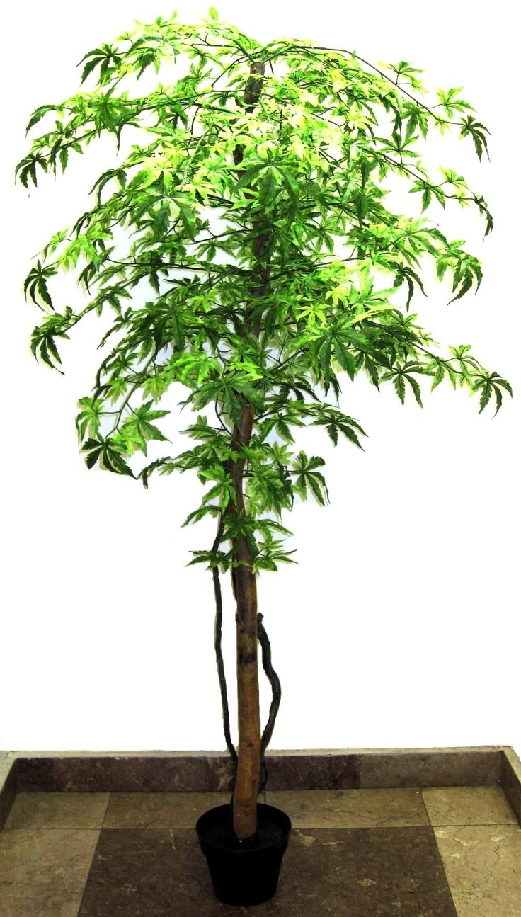 Mű arália fa
