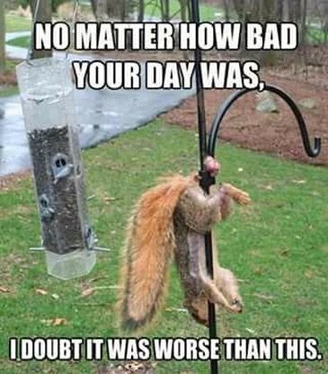 Happy Friday everyone! Lol  - - - - - #tgif #tgifridays #tgifriday #weekend #weekends #friday #funny #laugh #comedy #comical #humor #humorous #laughing #laughmore #squirrel #balls #animalkingdom #animals