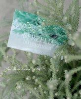 <i>Berzelia lanuginosa</i><BR><BR>ふわふわなバーゼリア<BR>『ラヌギノーサ』<BR>特大鉢!