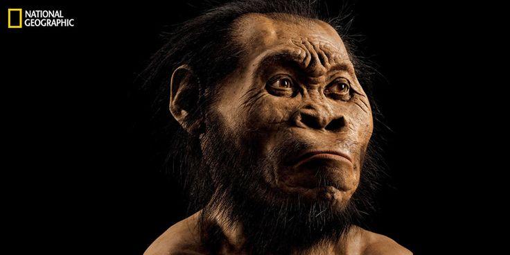 Une ancienne espèce du genre humain qui était jusqu'à présent inconnue a été mise au jour dans une grotte en Afrique du Sud où ont été exhumés les ossements de 15 hominidés, ont annoncé jeudi des chercheurs internationaux.