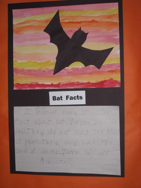 Bats Project And Writing 1st Grade Science First