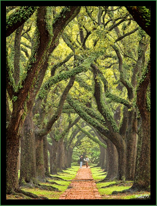 South Boulevard, Houston, Texas One of the best places in Texas for a Completely Serene Nature Walk >>> WOW! Has anyone been here?