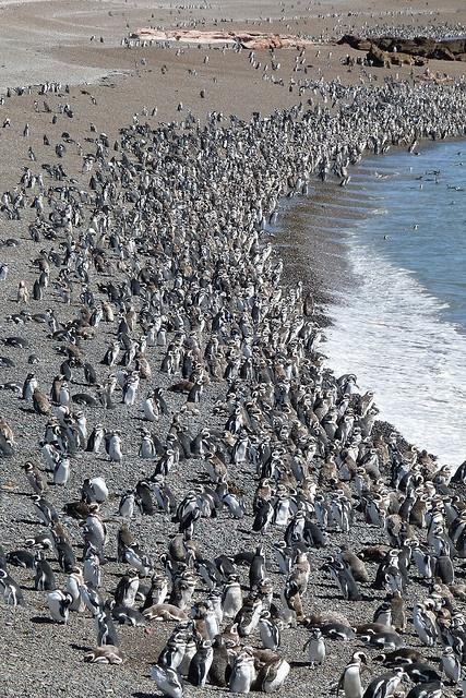 - Peninsula Valdes , Chubut . Declarada Patrimonio de la Humanidad por la UNESCO , Punta Tombo permite observar de cerca especies como pinguinos , ballenas , lobos marinos y variedad de aves marinas . . .@swami1951