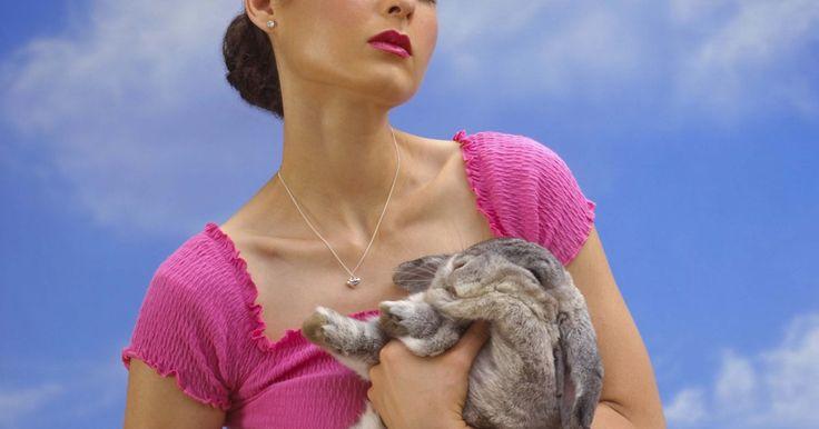 ¿Qué puede comer mi conejo gigante de Flandes?. Los conejos gigantes de Flandes son la raza más grande de conejos y llegan a pesar más de 12 libras (5,4 kg). Debido a su gran tamaño, los gigantes de Flandes necesitan más comida que los conejos de tamaño medio y les favorece una dieta alta en proteínas. Asegúrate de que alimentas a tu gigante de Flandes con una dieta bien balanceada para evitar ...