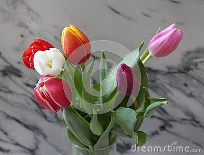 Some tulips with different colors with marble background