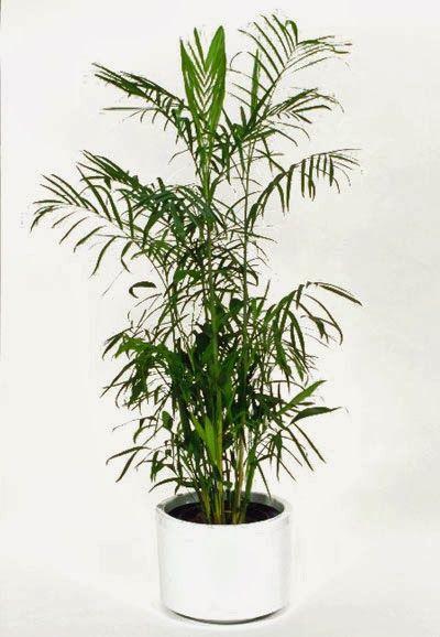 Sürdürülebilir Mimari: Havayı Temizleyen 10 Ev Bitkisi