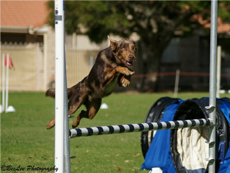 Superdog!  Sony A33