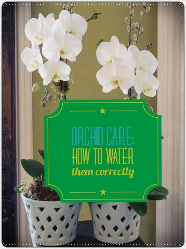 growing orchids in your garden u003c gardening pinterest growing rh pinterest com