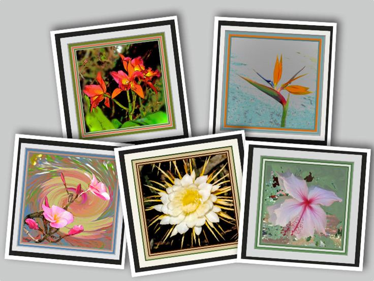 """Floral Wall Art. Five Different 12""""x12"""" Floral Inspirations. Printed Coordinated Mats. Frame Ready. Luscious Colors. Beautiful in Groups. by VintageArtForLiving on Etsy https://www.etsy.com/listing/572173062/floral-wall-art-five-different-12x12"""