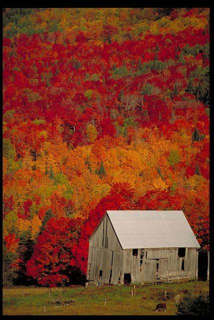 Autumn Barn in New Brunswick, Canada - the colors are amazing!