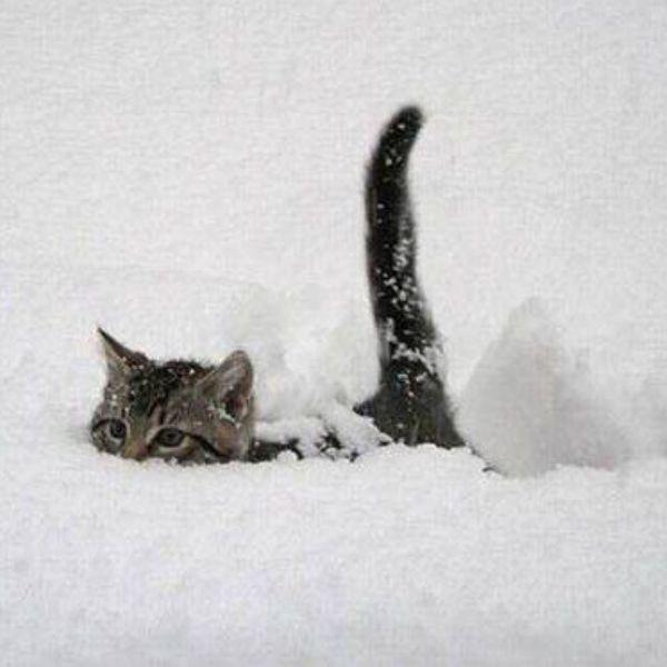 Животные Прикол infocentrum org - 810 фото. Фотографии Дима Чех Позитивчик.