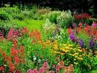 drought tolerant English garden LOVE this Pinterest