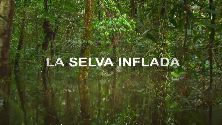 La amazonia colombiana está sufriendo una ola de suicidios entre los jóvenes indígenas de sus comunidades ancestrales, al verde espeso de esta…
