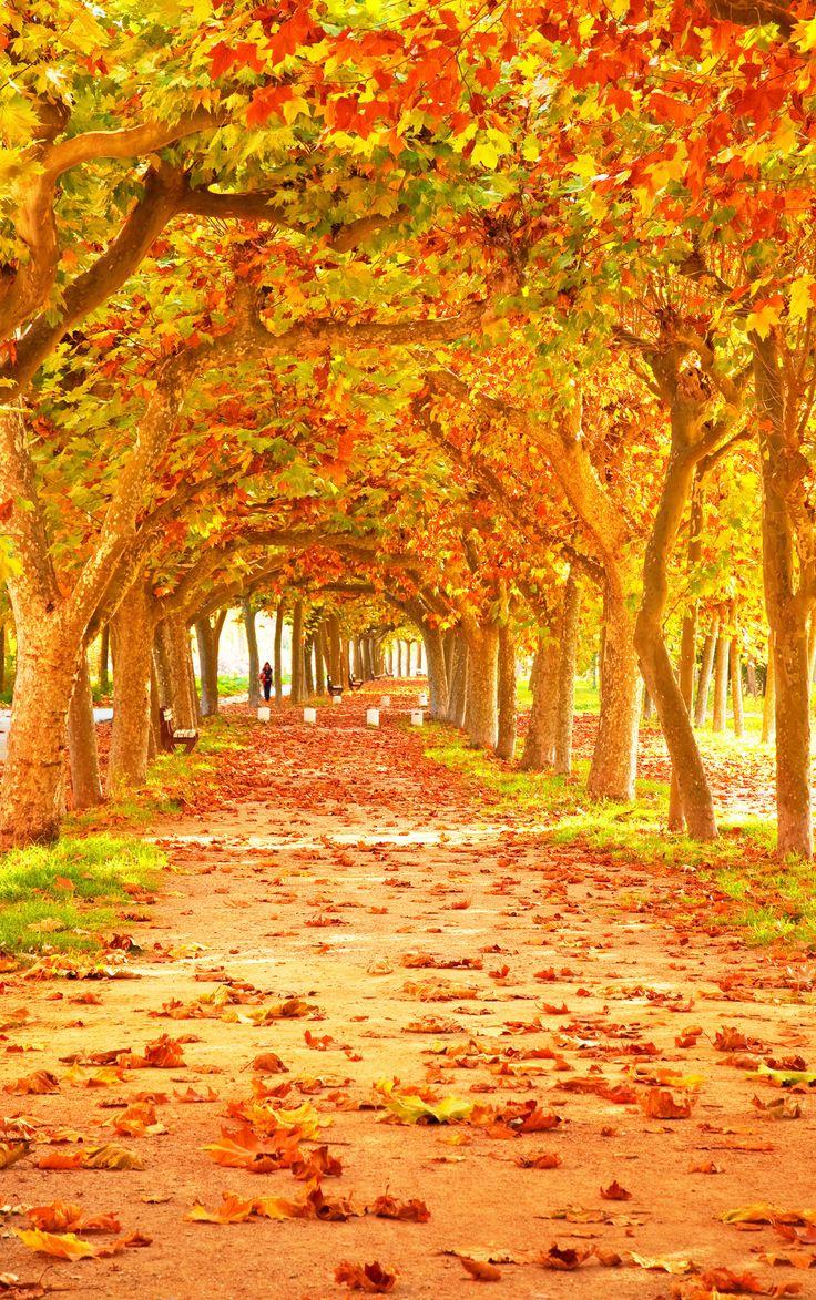 1000+ Ideas About Autumn Scenery On Pinterest