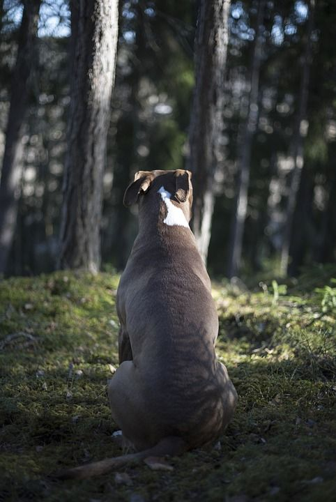 Reflecting on a special day for a special breed. October 22nd is National Pit Bull Awareness Day.