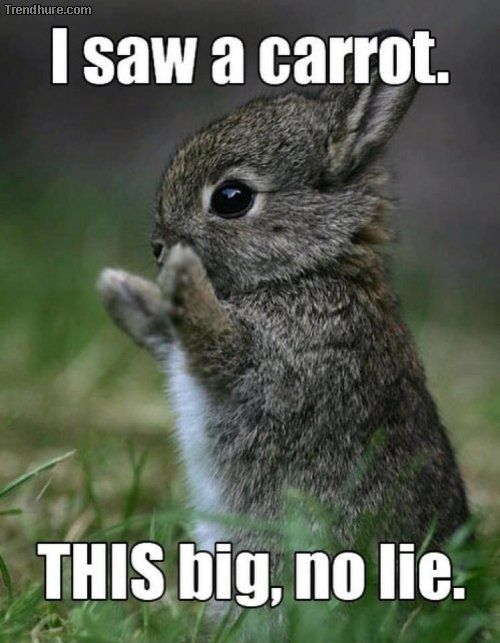 "Cute Little Bunny. ""I saw a carrot, this big, no lie""."