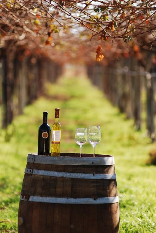 Chilecito, #LaRioja #TierraDeVinos   #ArgentinaEsTuMundo #wine #vino #turismo #Argentina  Más info en http://www.facebook.com/viajaportupais