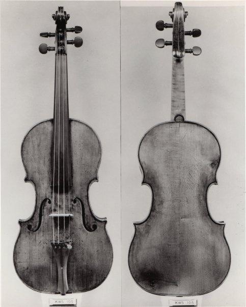 розетка, цветы фото скрипки гранчино каждый нас