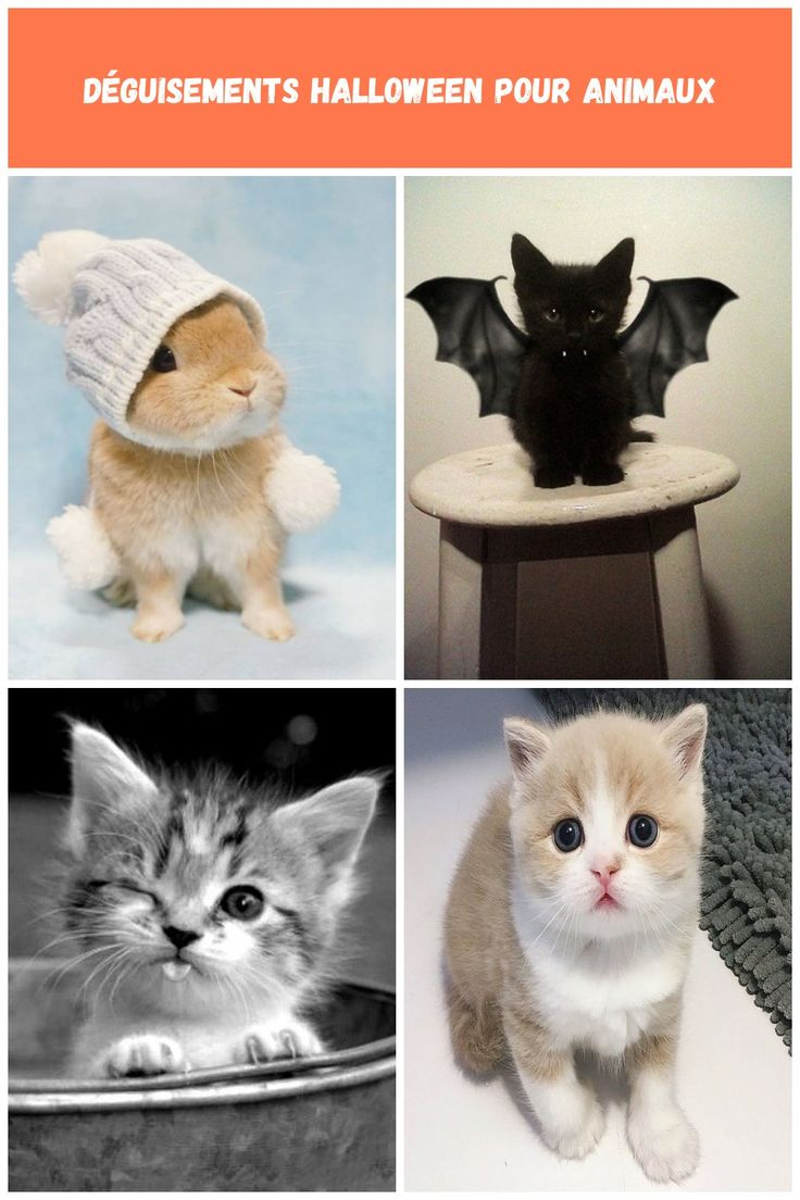 Cuteness Overload: Bunnies Take Over Cats as the Cutest Pet Unlike the popular t…