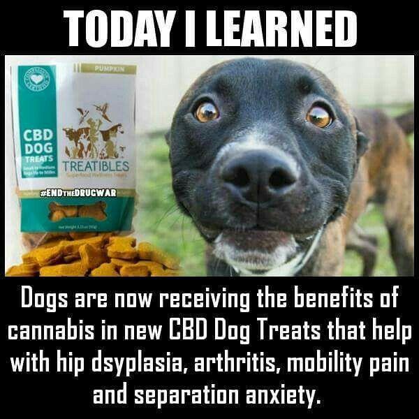 CBD dog treats help hip dysplasia, arthritis, Mobility pain and separation…