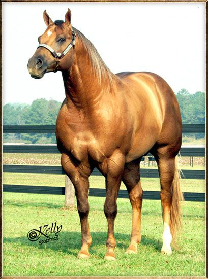 MR YELLA FELLA 1995 AQHA Palomino Stallion Sire: Page impressive ~ Dam: Lets Skip Town TWO TIME AQHA WORLD CHAMPION TWO TIME PHBA WORLD CHAMPION