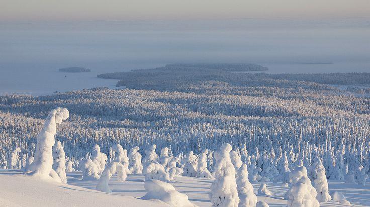 Riisitunturi National Park, Lapland, Finland. Visitfinland.com