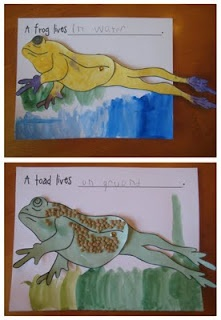 Love the models showing the differences between frogs and toads