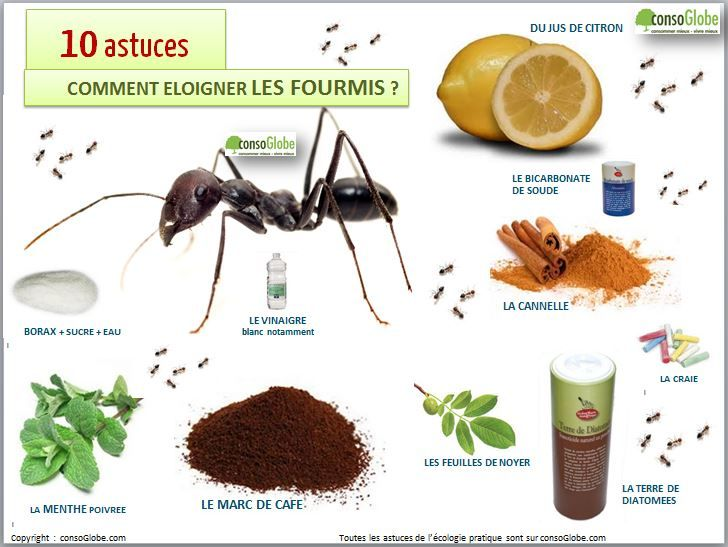 Best 25 chasser les fourmis ideas on pinterest fourmis for Anti fourmis maison