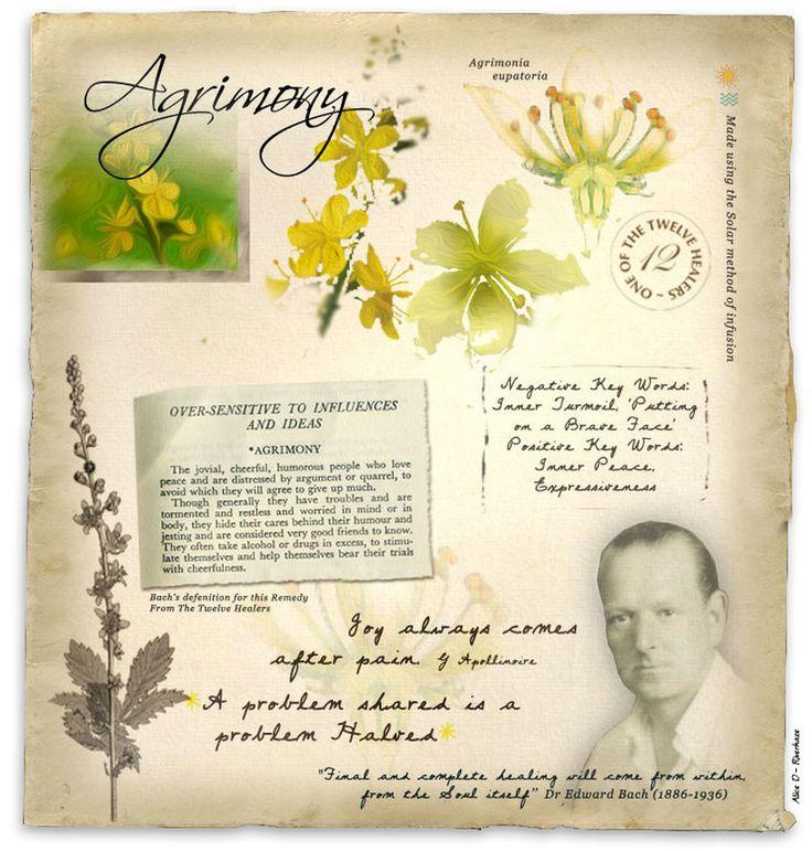 Agrimony - Florais de Bach Más