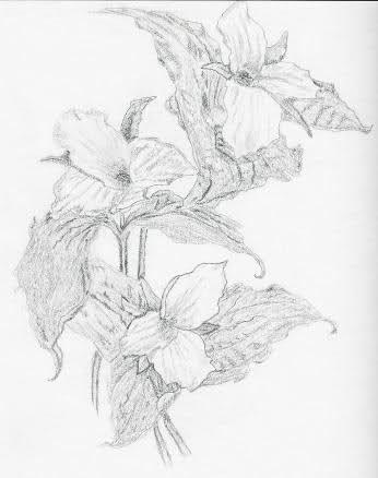 Karakalem Çiçek Çizimleri - Vazgecmem.NET