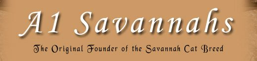 Savannahs :: Domestic Shorthair x African Serval :: Still RedicKulously expensive: SBT (F6+) $1,200-$3,800 :: :: F5 $1,200-$3,800 :: :: F4 $1,200-$4,500 :: :: F3 (~16% Serval and so on) $3,500-$6,000 :: :: F2 (~29% Serval) $9,000-$16,000 :: :: F1 (~53% Serval) $12,000-$35,000 =O.o=
