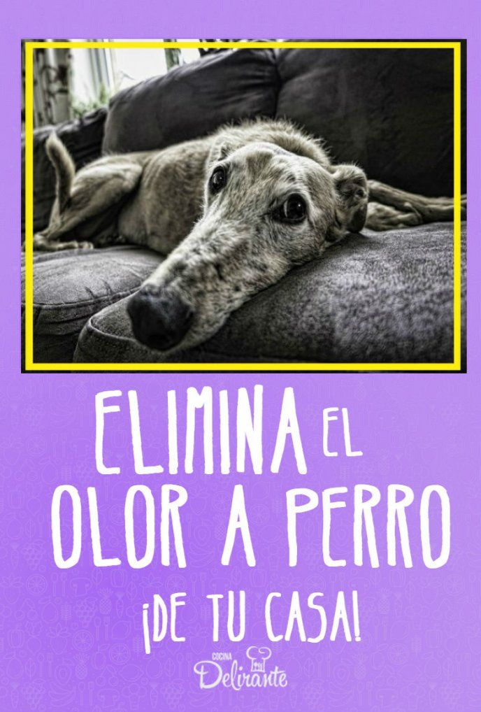 Eliminate the dog smell from your house with this trick - Eliminate the dog smell from your house with this trick Eliminate the dog smell from your house wit - Dog Smells, Pet Life, Dog Houses, Baby Dogs, Yorkshire Terrier, My Animal, Shih Tzu, Dog Owners, Dog Treats