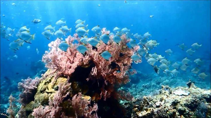 バリ島ダイビング: バリ島 アメッドで癒しのダイビング/Bali Amed, Diving