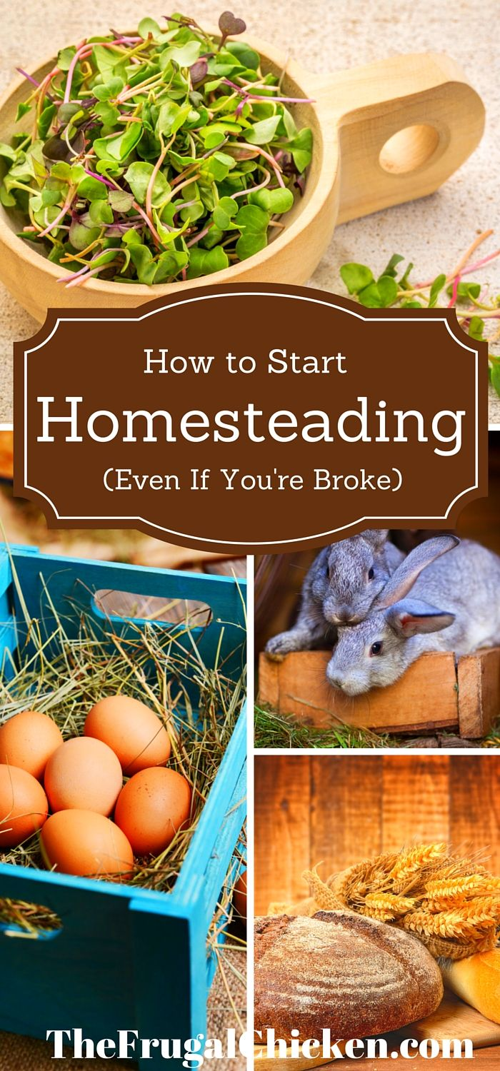 You can start homesteading today using these simple hacks I've learned over the years. You don't need a lot of money, either.: