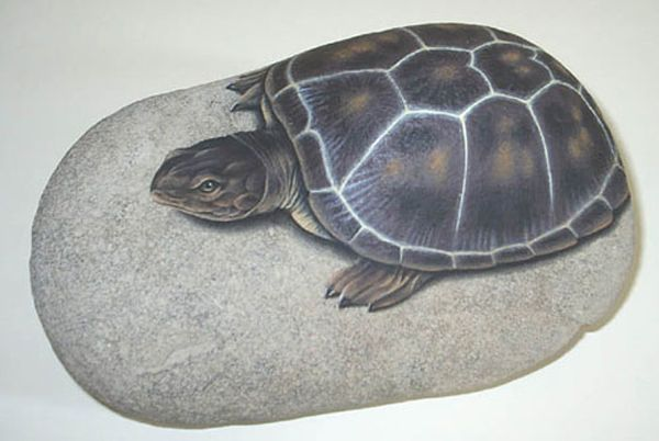 Painted turtle on a rock