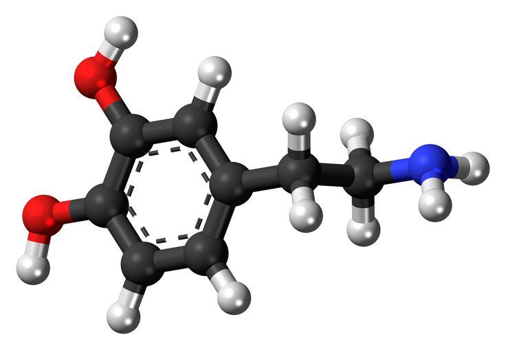 Evolution meets biochemistry to better understand how dopamine receptors work