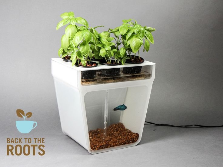 Home Aquaponics Kit: Self-Cleaning Fish Tank That Grows Food's video poster