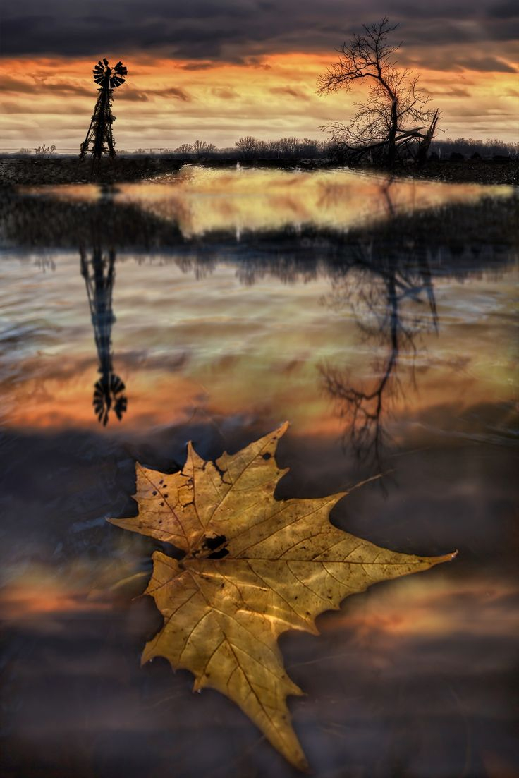 """themes in the last leaf The last leaf by o henry is an interesting short story about a sick girl named in his wonderful short-story """"the last leaf"""", using sacrificial themes."""
