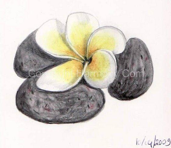 17 best images about mes dessins on pinterest croquis carafe and photos - Fleur de tiare dessin ...