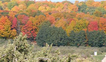 Wisconsin Fall Color Report - Know where the color is before you head out!  |  www.travelwisconsin.com