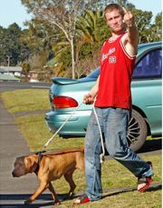 pit bull terriers make good pets essay American pit bull terrier: american can/do pit bulls make good pets the eventual cross-breeding of bulldogs with terriers served to heighten their legerity.