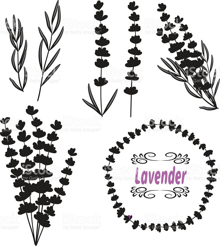 Set of lavender. Black silhouettes royalty-free stock vector art