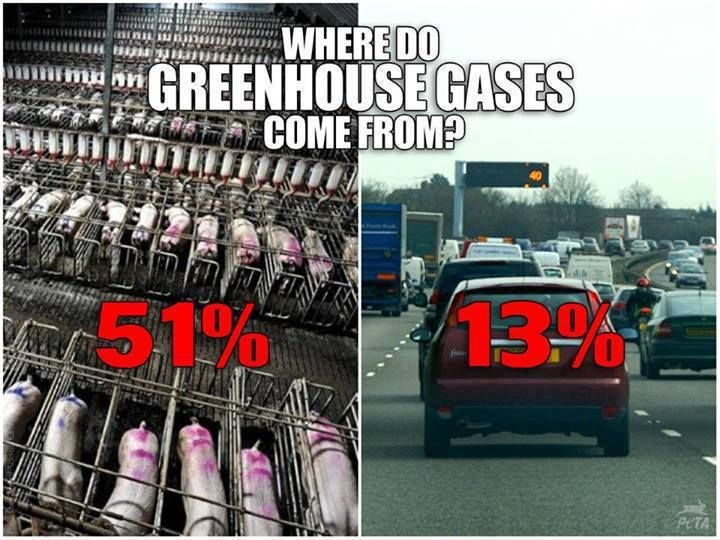 """""""According to the Worldwatch Institute, 51% or more of ALL GREENHOUSE GASES are from raising animals for food. Only 13% comes from cars."""
