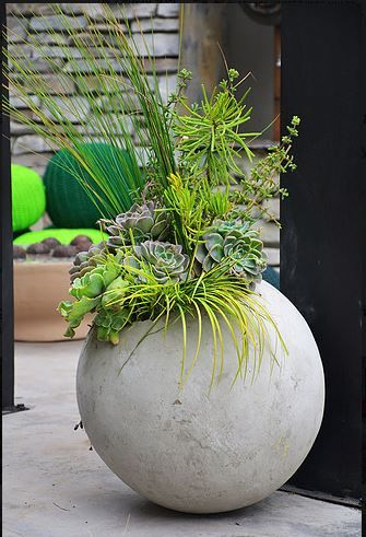concrete balls, normally used to prohibit parking in pavement, up cycled as contemporary planter