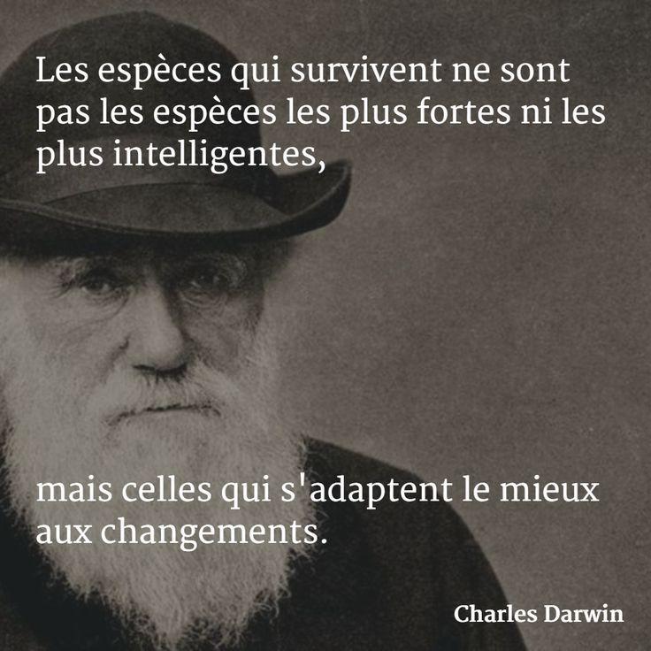 Life Quotes Les Especes Qui Survivent Ne Sont Pas Les Especes