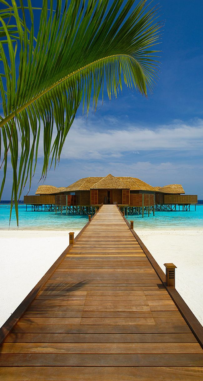 I dream of seeing the Maldives...sadly its pretty high on the list of endangered places due to climate change and sea level rise...   Lily Beach...Maldives